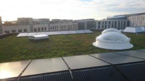 Zonnepanelen op sedum dak